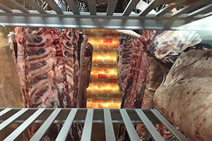 Molds during meat maturing