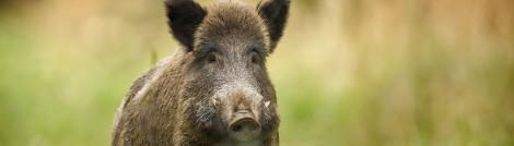 Wildfleisch eignet sich ebenfalls fürs Dry Aging